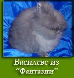 посмотреть Василевс