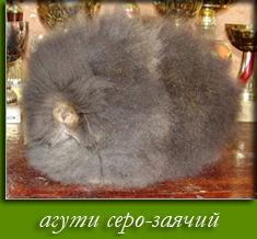 агути серо-заячий